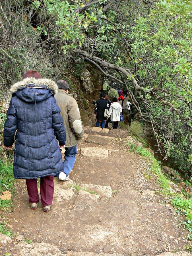森林步行- Banias 免版税库存图片