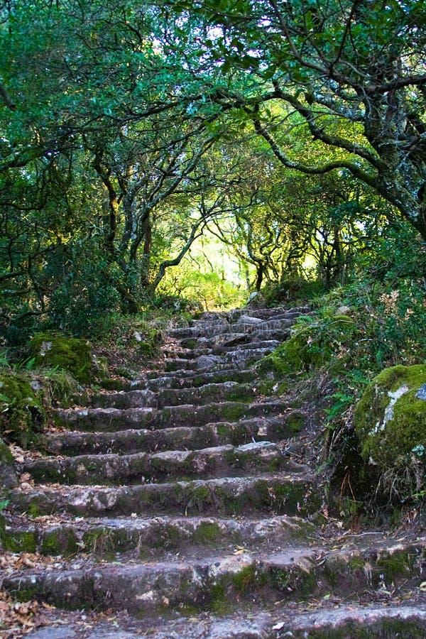 森林步骤 库存图片