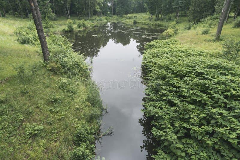 森林水池在夏天之前 库存照片