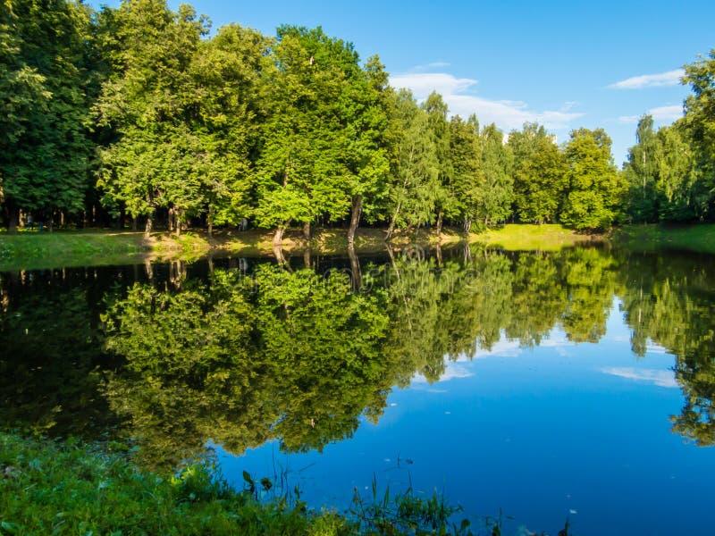 森林池塘在夏天 免版税库存图片