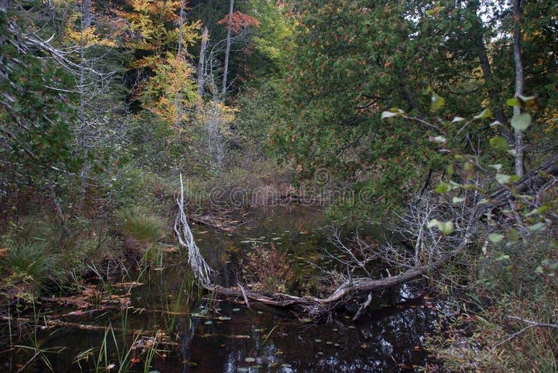 森林池塘在秋天, Hiawatha国家森林,密执安,美国 图库摄影