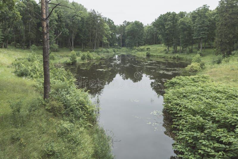 森林池塘风景 免版税库存图片