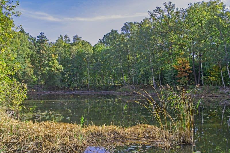 森林池塘 免版税图库摄影