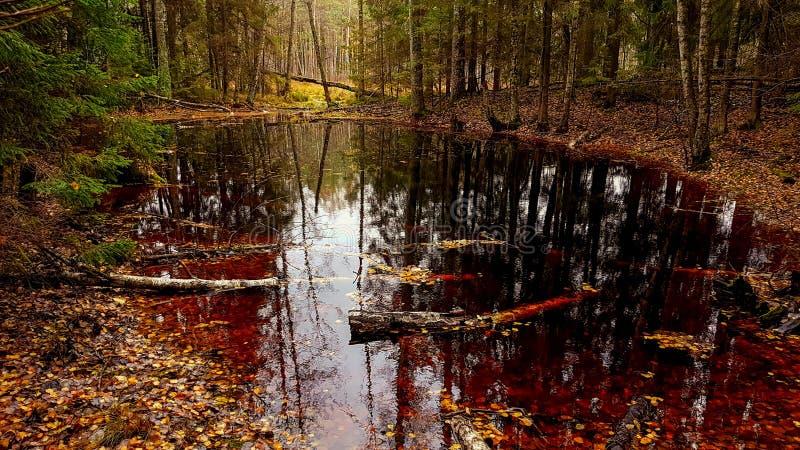 森林池塘 免版税库存照片