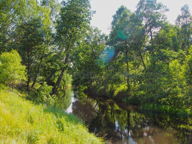 森林河在俄罗斯中部 库存照片