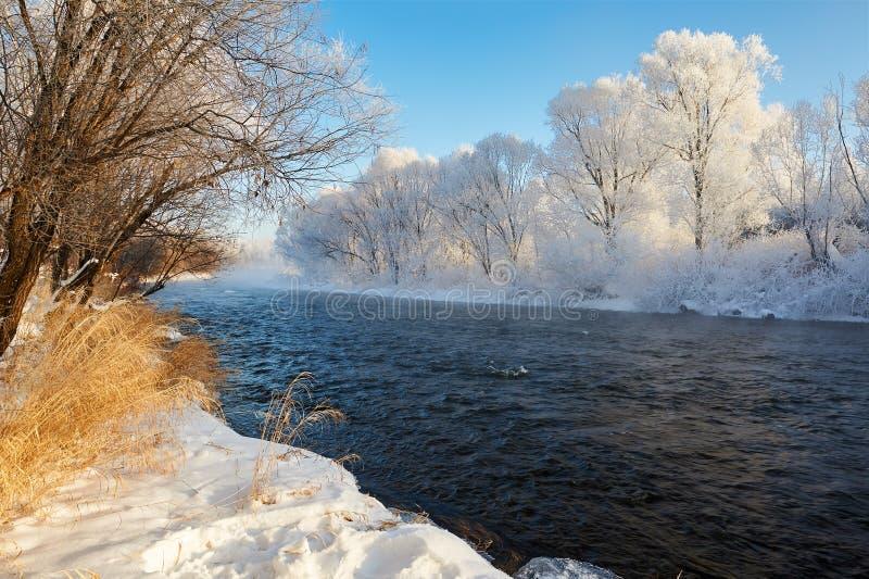 森林河水和霜  免版税库存图片