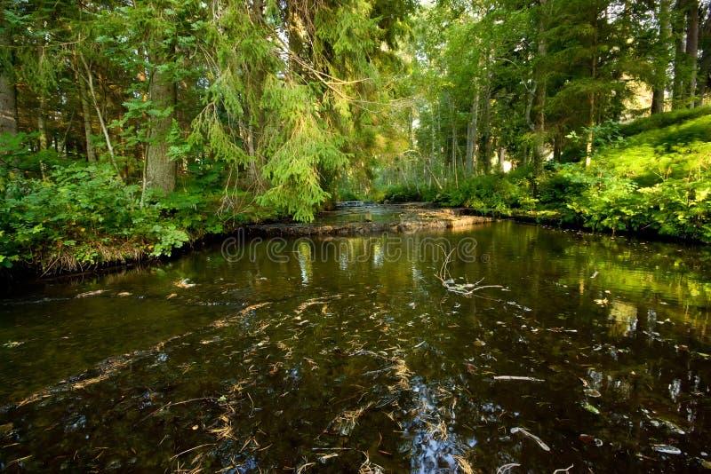森林河 免版税库存照片
