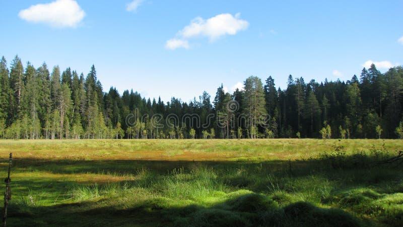 森林沼泽 库存图片