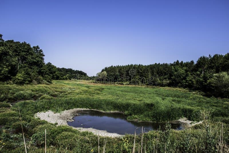 森林沼泽 库存照片