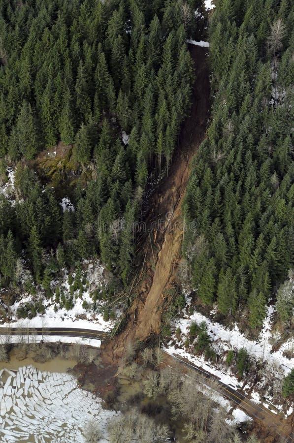 森林泥流华盛顿 库存照片