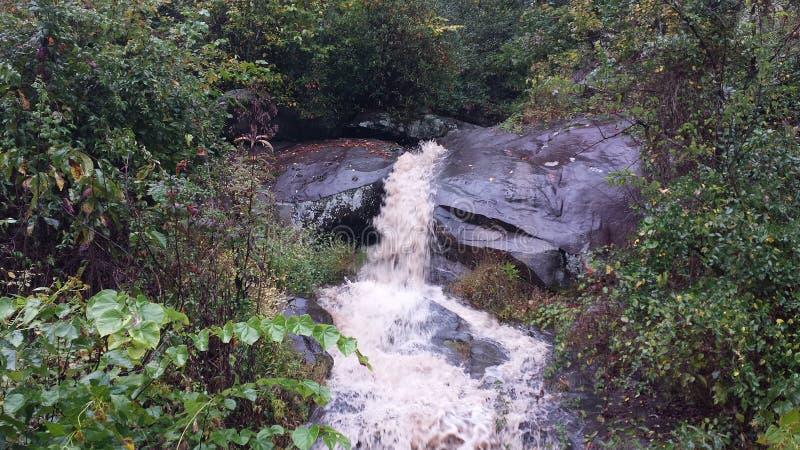 森林洪水创造瀑布 库存照片