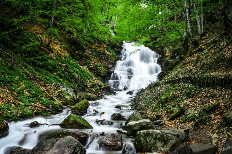 森林流动的瀑布上流在喀尔巴汗的山有噪声流程的下来在森林背景  免版税库存照片