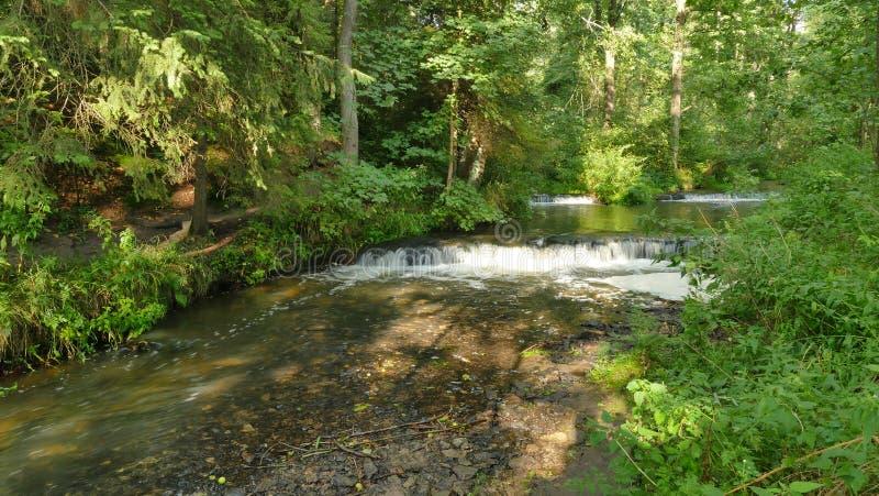 森林流 落下构造 ` Tanwia `小河 库存图片