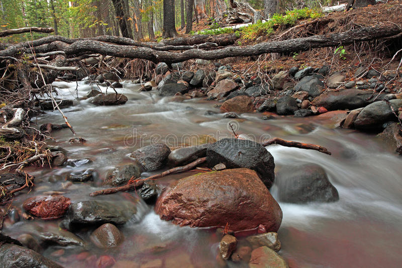 森林流 图库摄影