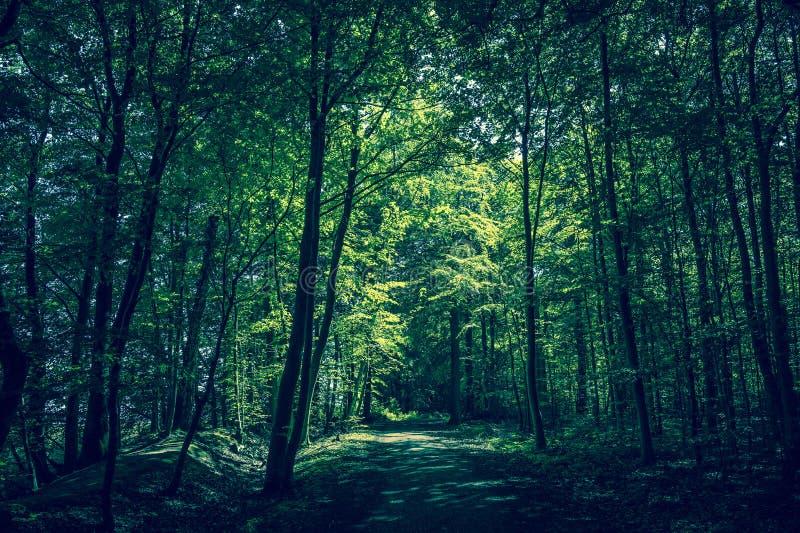 森林清洁 免版税库存图片