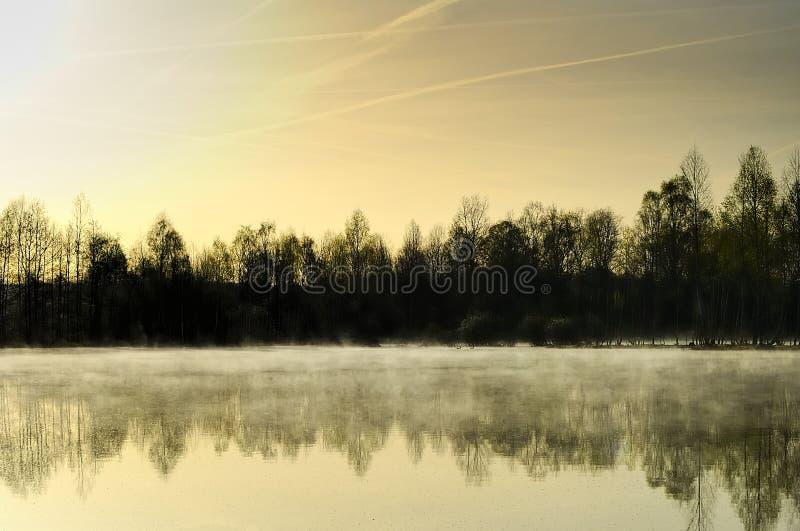 森林湖反射了 免版税库存照片