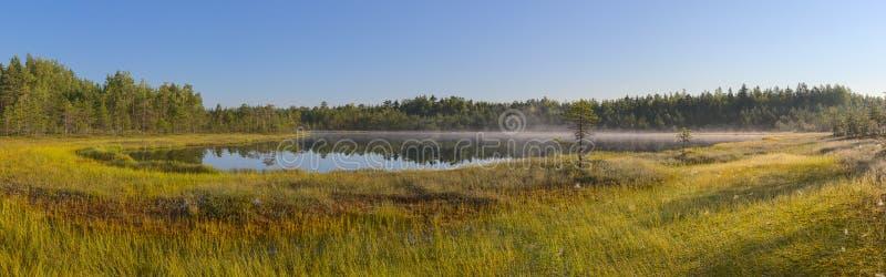 森林湖和沼泽的全景 库存图片