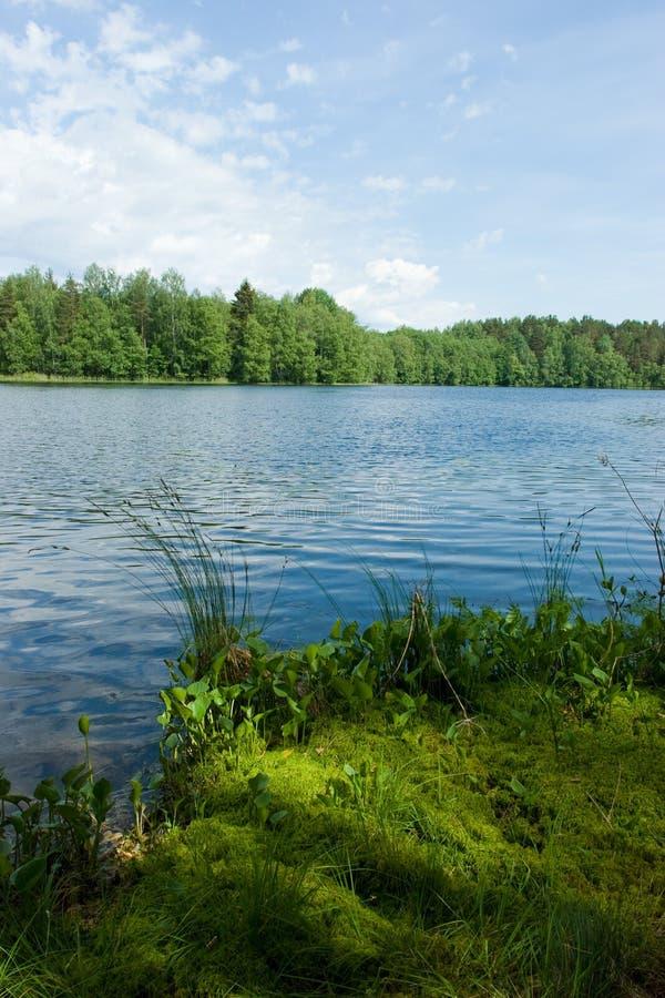 森林湖夏天 库存照片