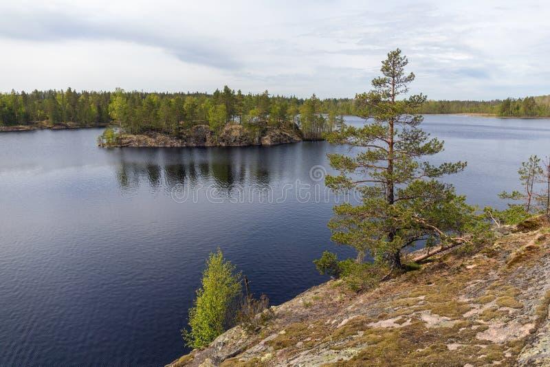 森林湖的海岛 免版税库存照片
