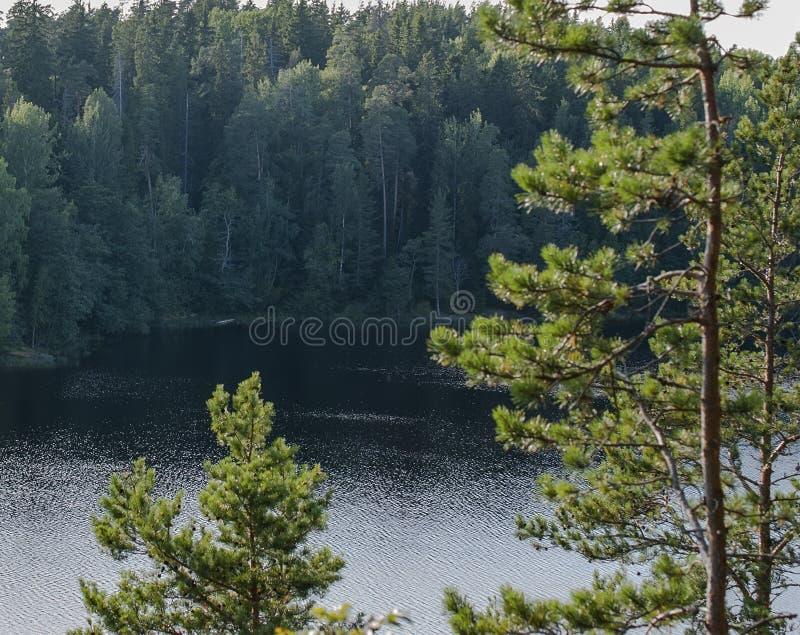 森林湖看法通过树 免版税库存图片