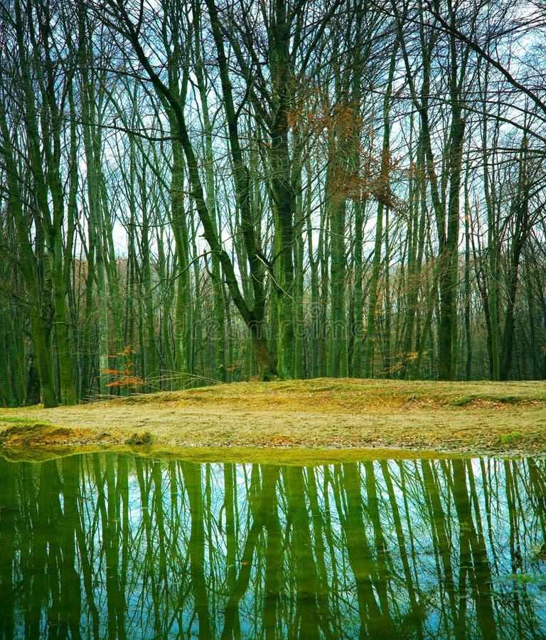 森林湖 免版税库存图片