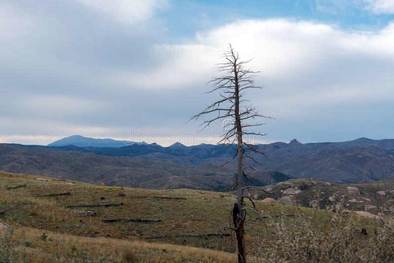 森林火灾与山的受害者树 免版税库存照片