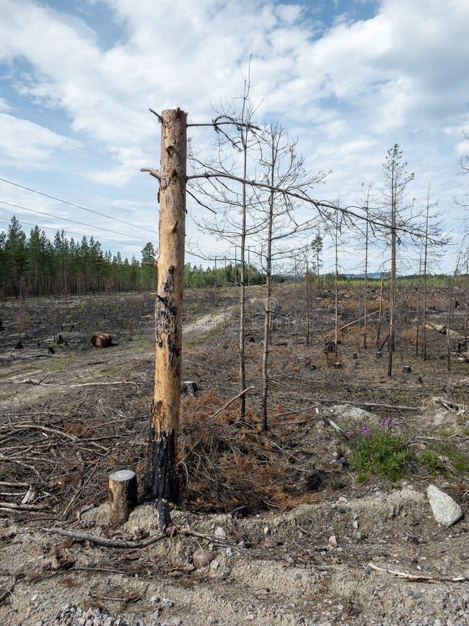 森林火灾后果 免版税库存图片