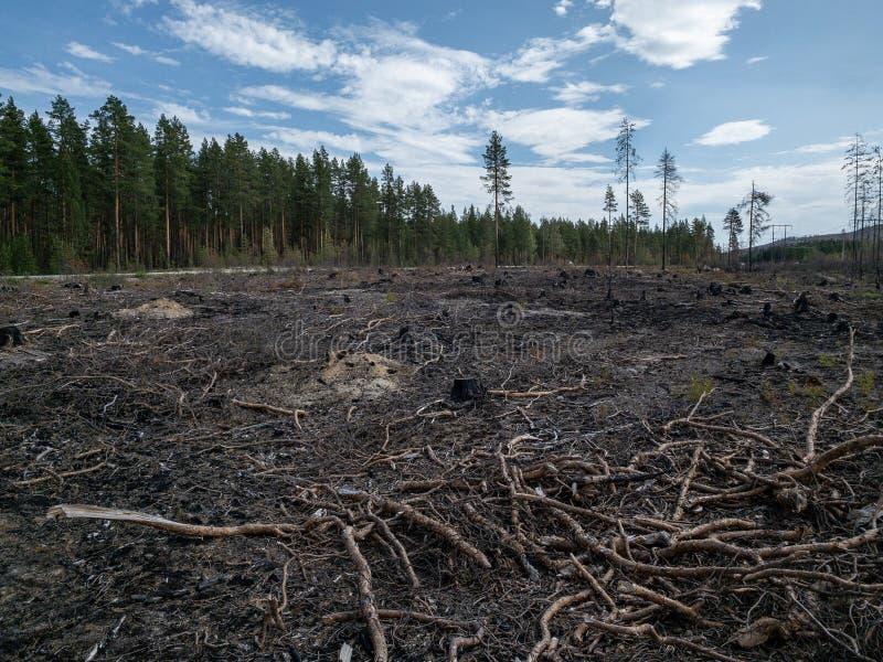 森林火灾后果 免版税图库摄影