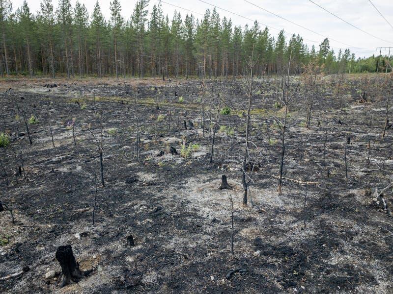 森林火灾后果 库存照片