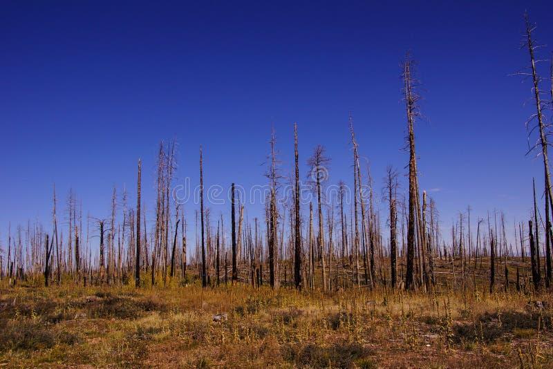 森林火灾后果2000年 免版税库存照片