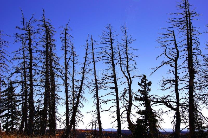 从森林火灾的被烧的断枝 库存图片