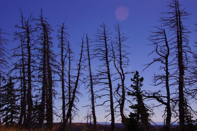 从森林火灾的被烧的断枝 免版税库存图片