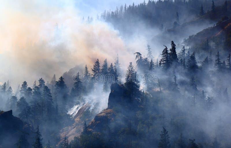 森林火灾 免版税库存图片