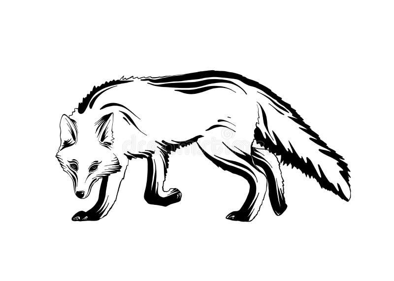 森林狐狸手拉的剪影在白色背景在黑色的隔绝的 详细的葡萄酒蚀刻样式图画 皇族释放例证
