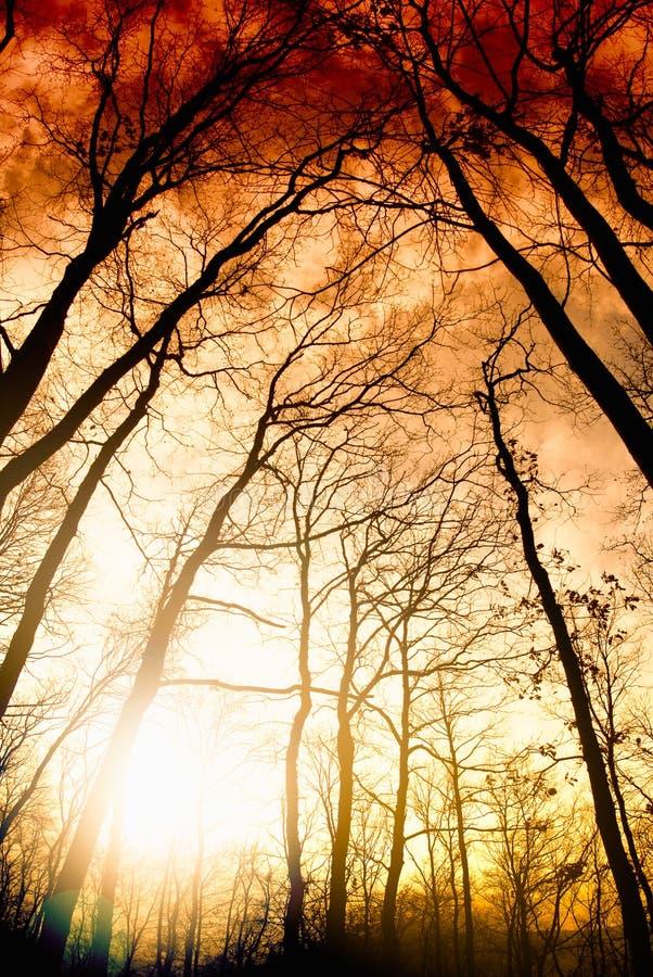 森林现出轮廓在日落 免版税库存图片