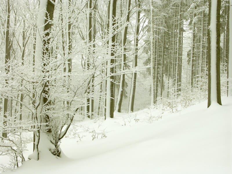 森林理想的风景冬天 库存图片