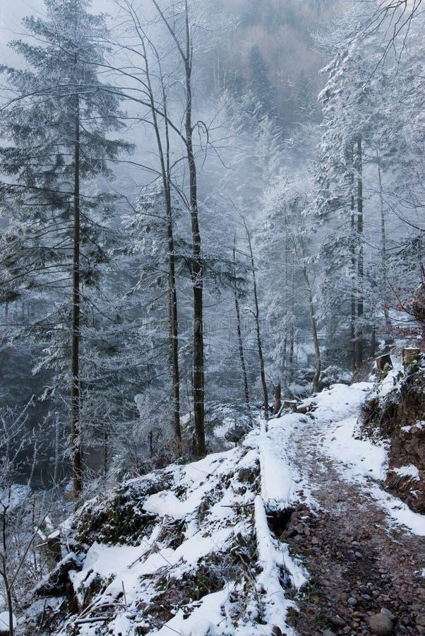 森林白色 免版税库存照片