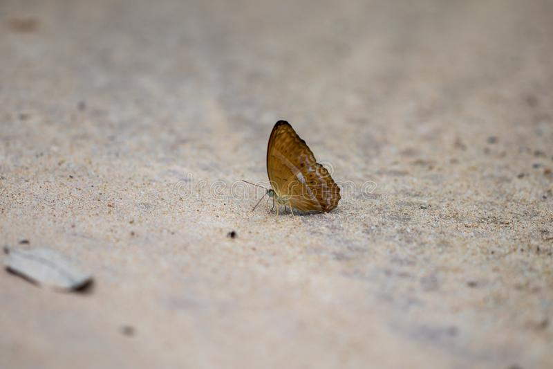 森林的一只美丽的蝴蝶 库存照片