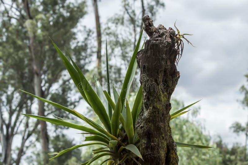 森林的一根小树干 免版税库存照片