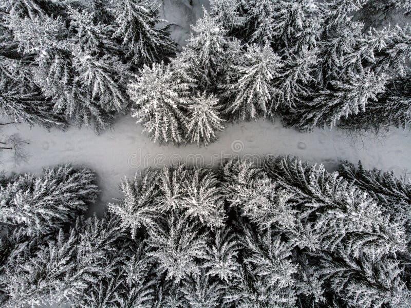 森林的俯视图 免版税图库摄影