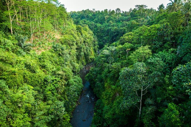 森林的密林在热带,看法和从土佬的河 免版税库存照片
