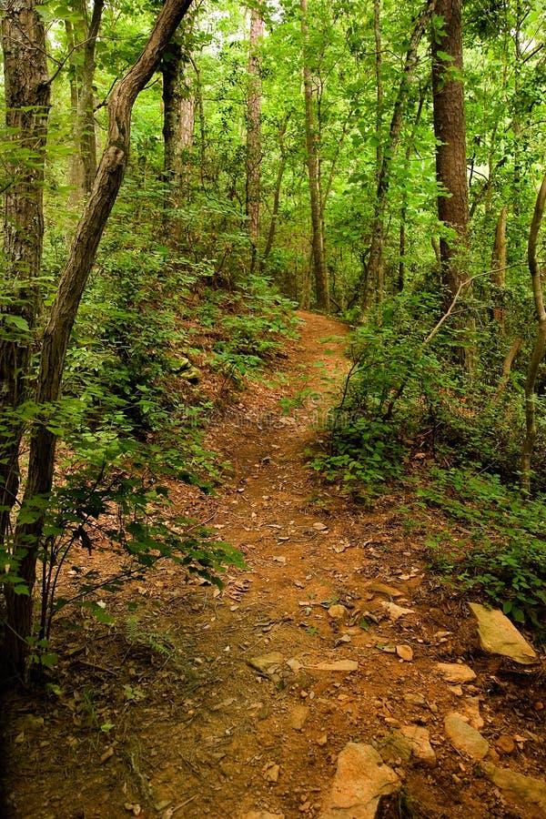 森林的小山路径 图库摄影