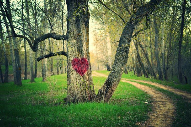 森林的心脏 免版税库存图片
