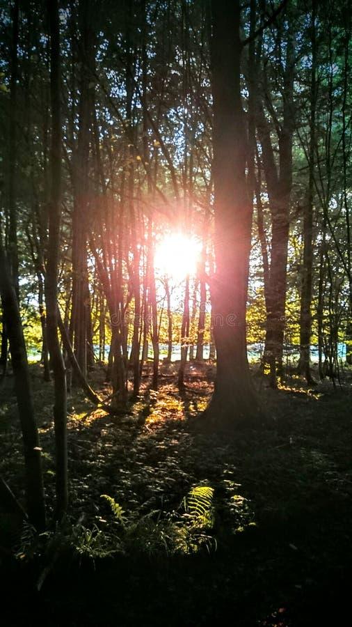 森林的心脏 免版税图库摄影