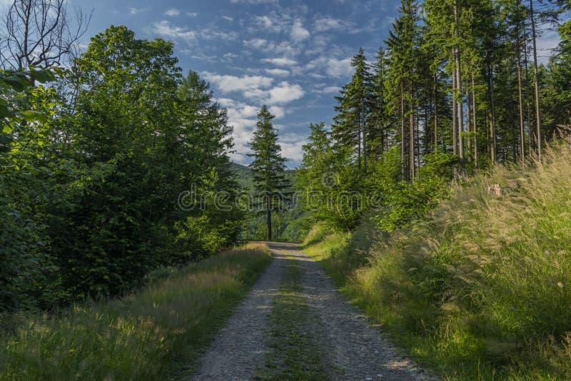 森林的看法在Javorovy小山附近的山的在摩拉维亚 免版税库存图片