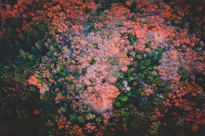 森林的美丽的空中射击 库存照片