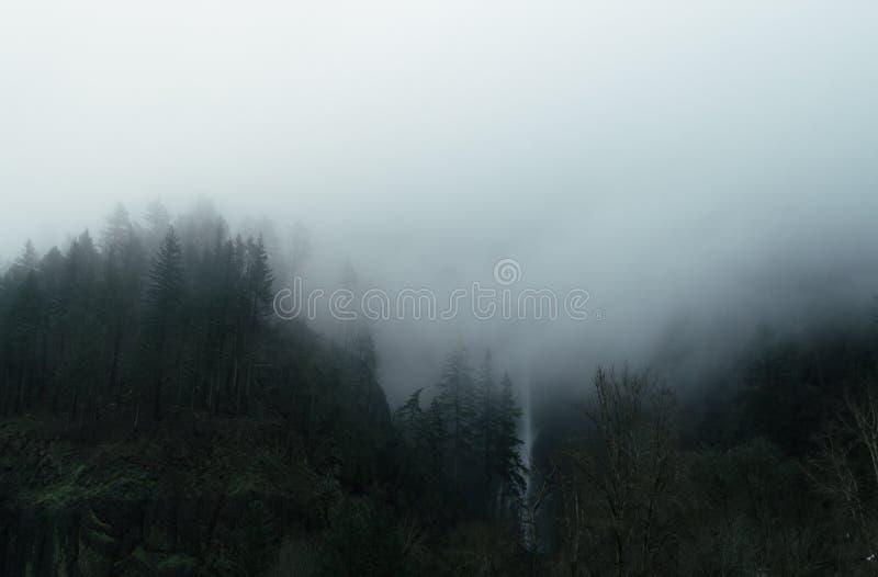 森林的美丽的空中射击 库存图片