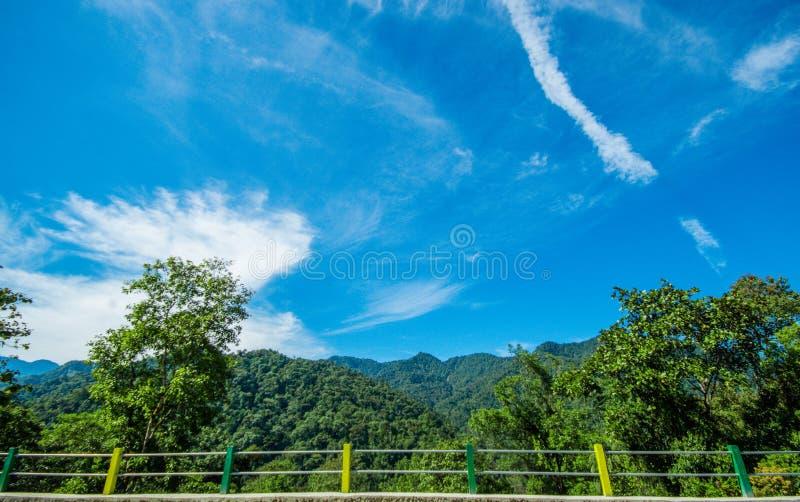 森林的美好的风景在Mindo,华美的蓝天的,与在图片的一座桥梁 图库摄影