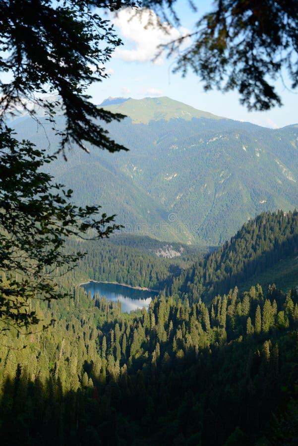 森林的蓝色珍珠 免版税库存照片