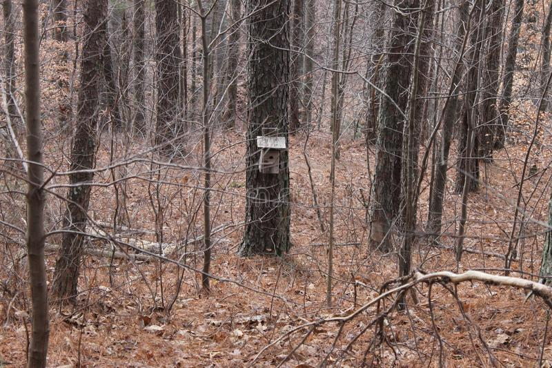 森林的鸟房子 库存照片